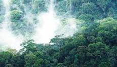 Indio-Maíz en Nicaragua