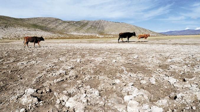 ganaderos,sequía,reses con sed,ríos secos,