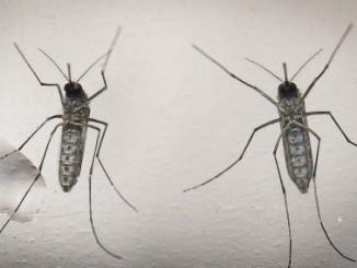 oms,nueva advertencia,zika,Guillain-Barré,