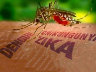 casos de zika,nicaragua,mosquito transmisor,