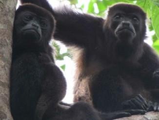 muerte,promedio de monos, auyadares,