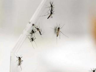 zika,combate del virus,técnicas nucleares,