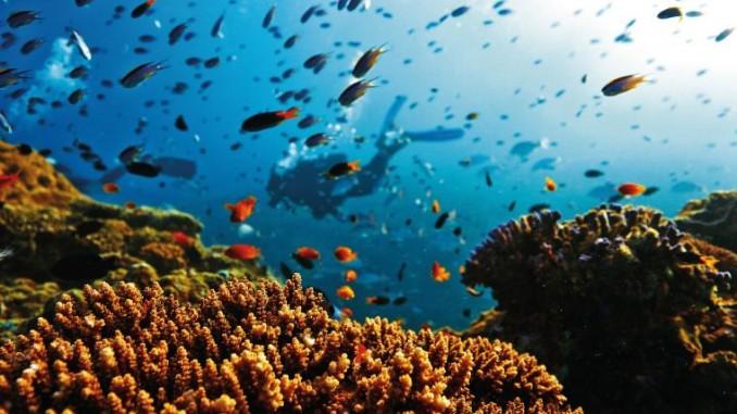 muerte,barrera de coral,australia,cambio climático,