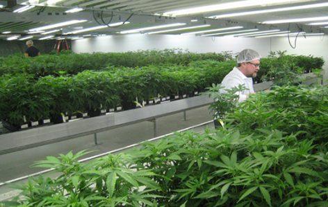 Colombia,Uso legal de marihuana, Medicinal