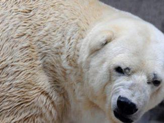 Argentina Cambio Climático,Último oso en el país