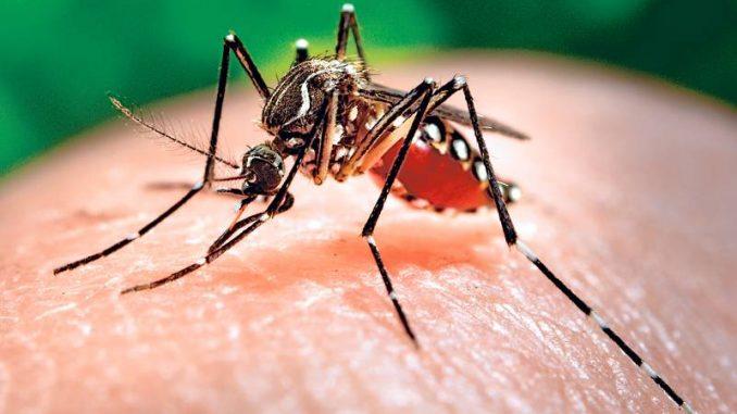 OMS,virus,Zika,alerta