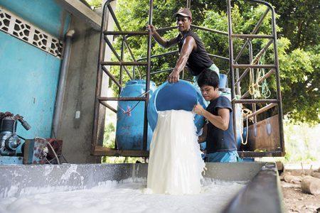 Trabajadores del acopio de leche de doña Lea Ruth Gutierrez, de