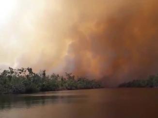 Incendio Forestal en Indio Maíz