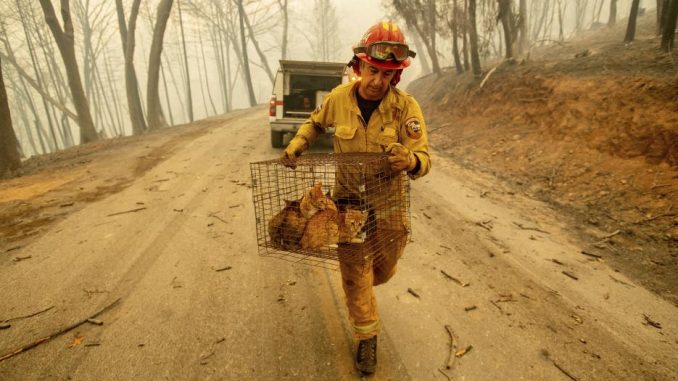 Incendio,California,