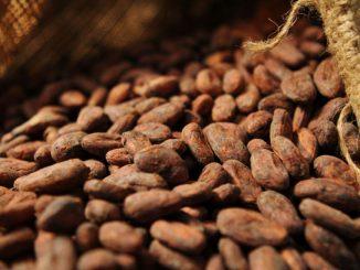 Cacao (topsante.com)